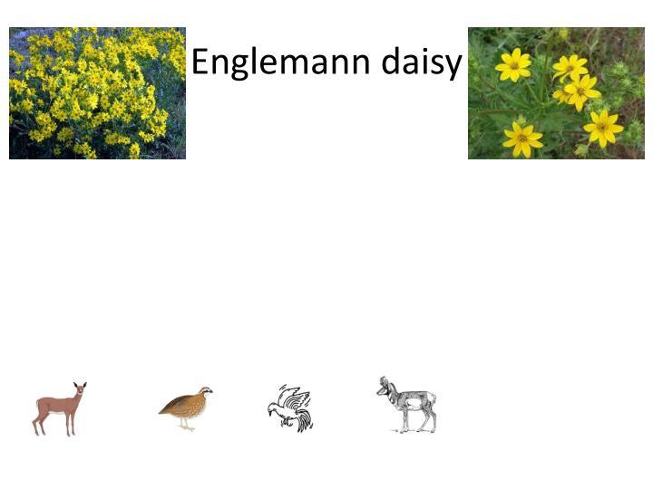 Englemann