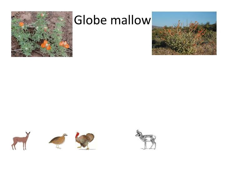 Globe mallow