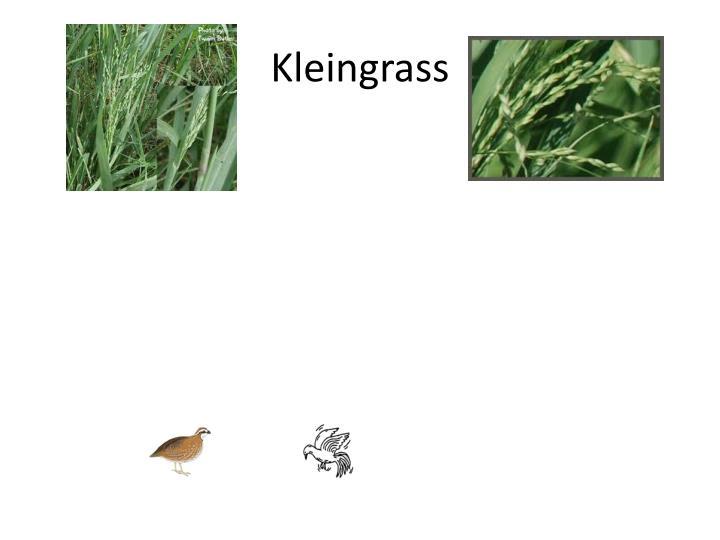 Kleingrass