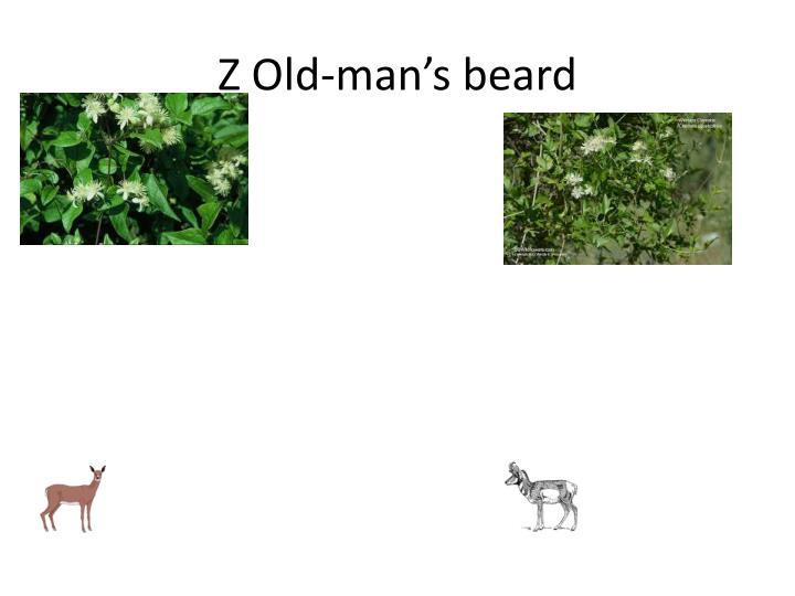 Z Old-man's beard