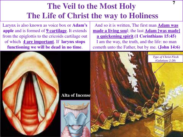 The Veil to the Most Holy
