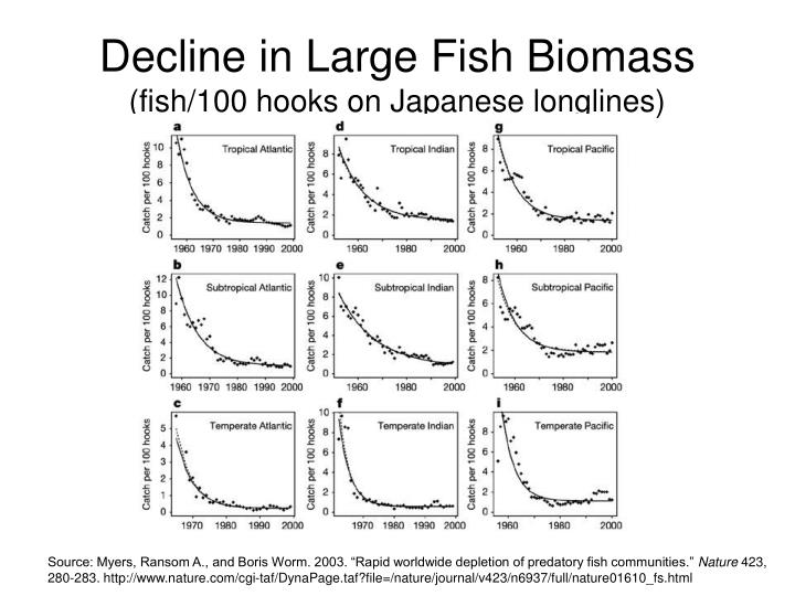 Decline in Large Fish Biomass