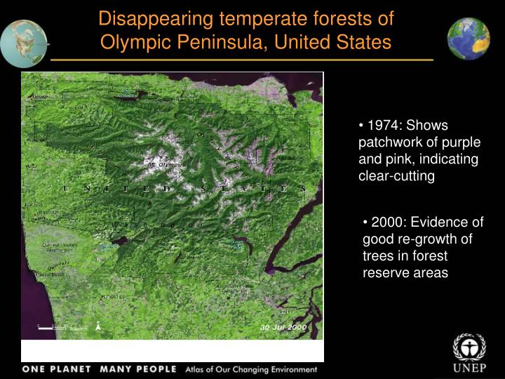 Disappearing temperate forests of  Olympic Peninsula, United States