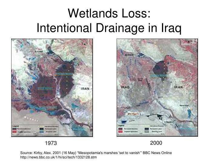Wetlands Loss: