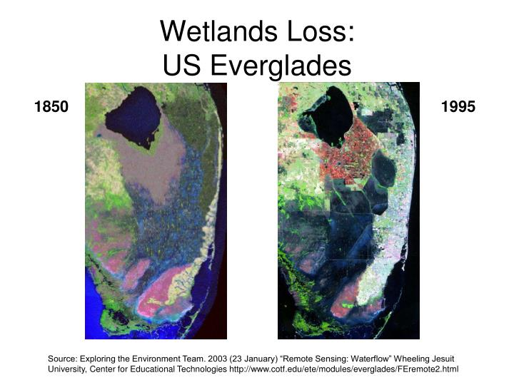 Wetlands Loss: