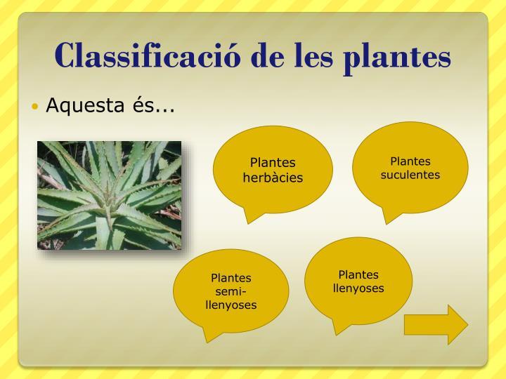 Classificació de les plantes
