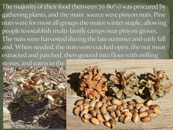 The majority of their food (between 70-80%) was procured by gathering plants, and the