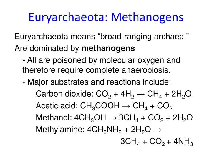 Euryarchaeota: Methanogens