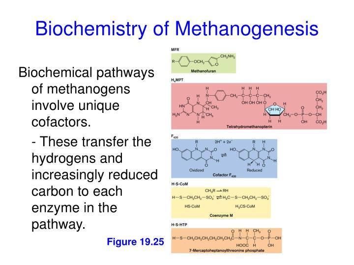 Biochemistry of Methanogenesis
