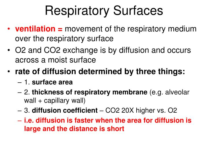 Respiratory Surfaces