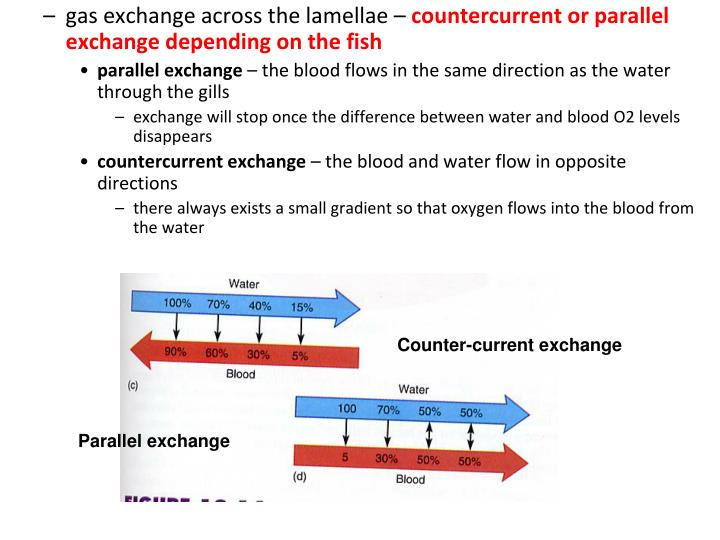 gas exchange across the lamellae –
