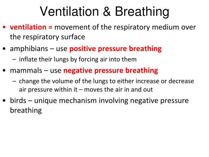 Ventilation & Breathing