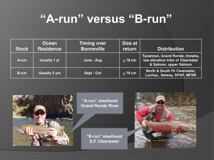 """A-run"" versus ""B-run"""