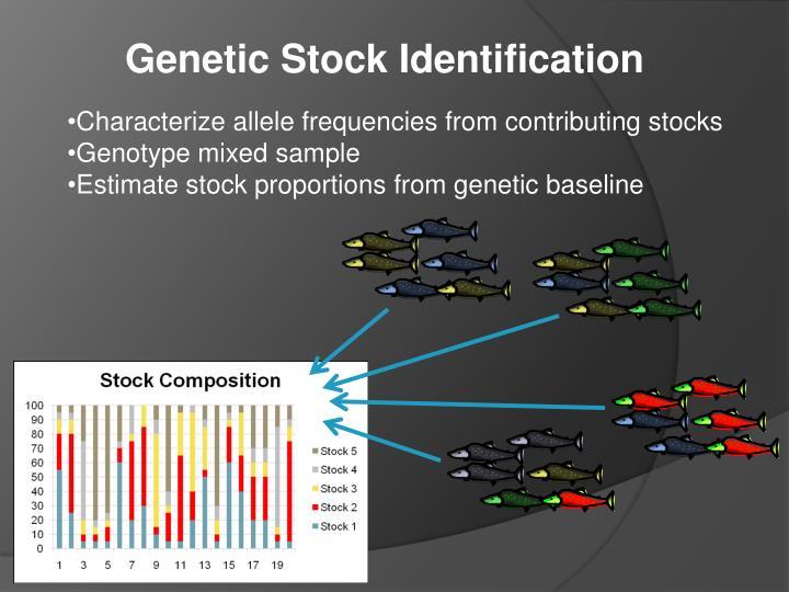 Genetic Stock Identification