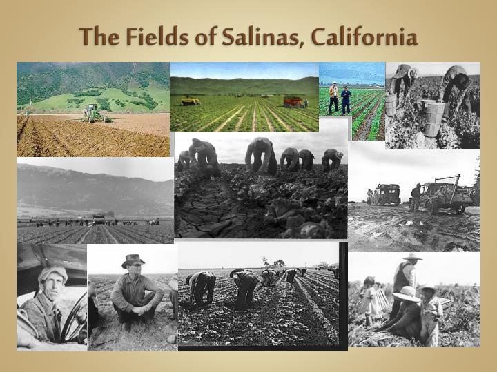 The Fields of Salinas, California