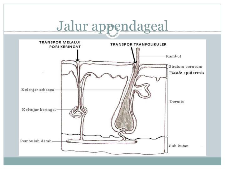 Jalur appendageal