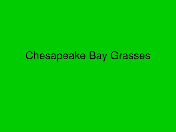 Chesapeake Bay Grasses