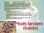 kudis sarcoptic scabies