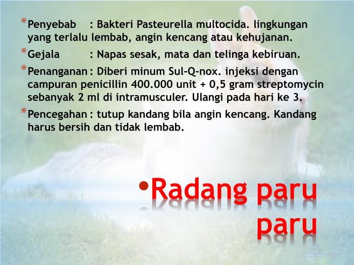 Penyebab: Bakteri Pasteurella multocida. lingkungan yang terlalu lembab, angin kencang atau kehujanan.