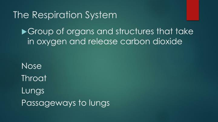 The Respiration System