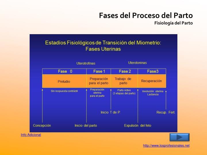 Fases del Proceso del Parto