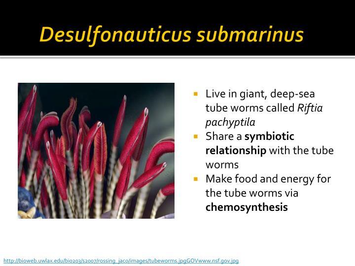 Desulfonauticus