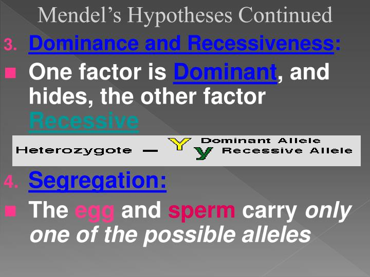 Mendel's Hypotheses Continued
