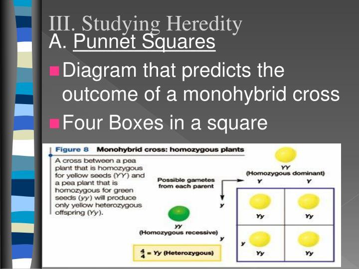 III. Studying Heredity