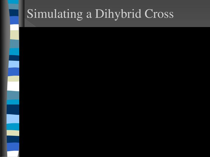 Simulating a Dihybrid Cross