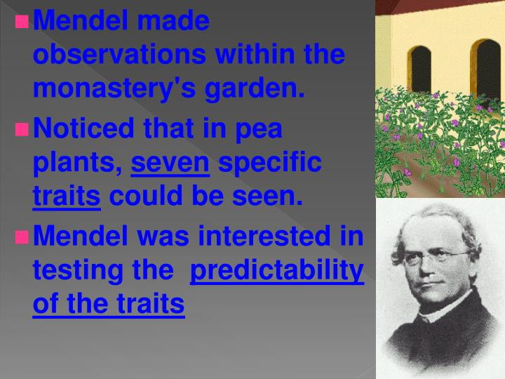 Mendel made observations within the monastery's garden.