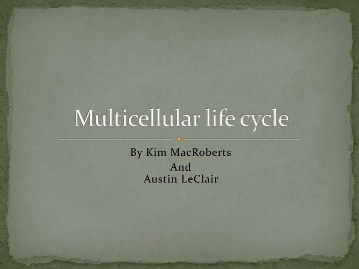 Multicellular life cycle