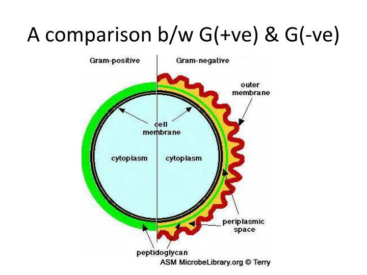 A comparison b/w G(+ve) & G(-ve)