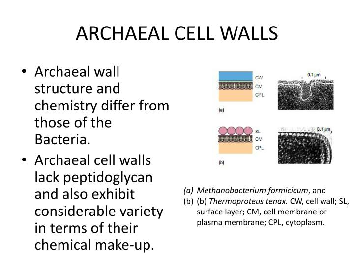 ARCHAEAL CELL WALLS