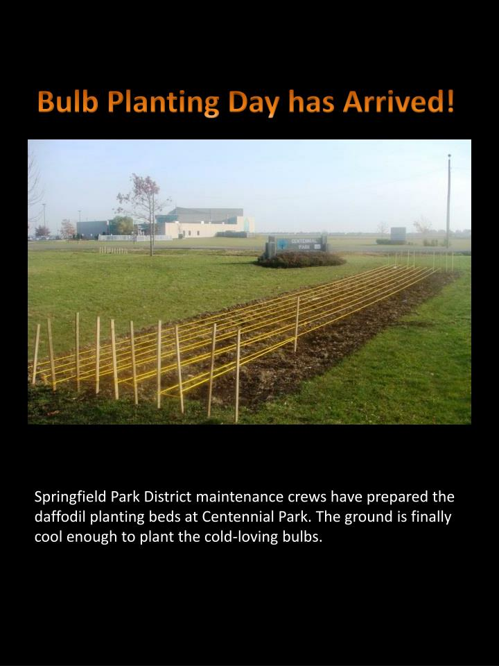 Bulb Planting Day has Arrived!