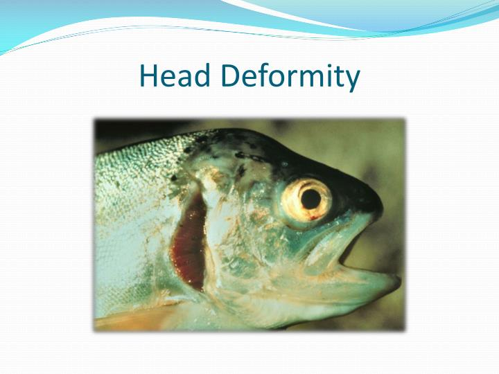 Head Deformity