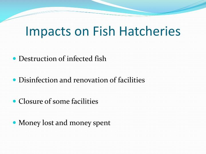 Impacts on Fish Hatcheries