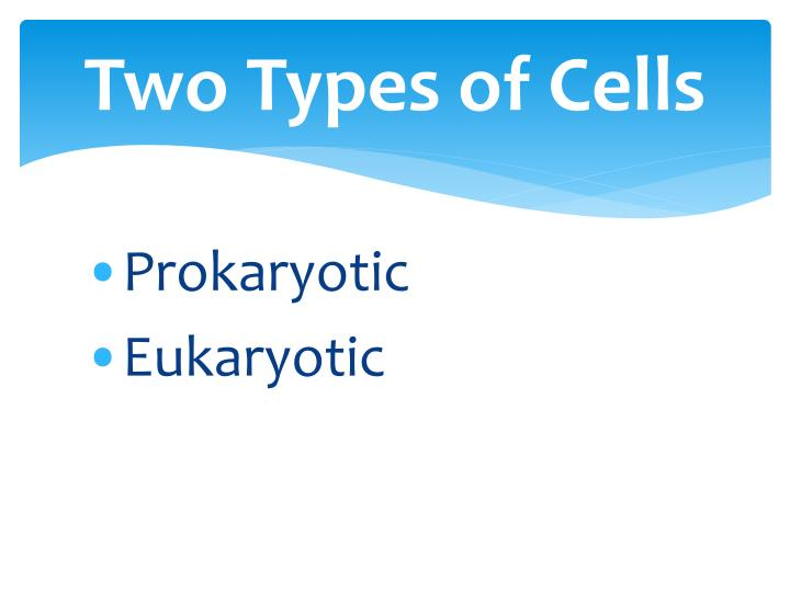 Two Types of Cells