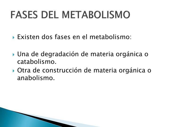 Las mejores pastillas para acelerar el metabolismo