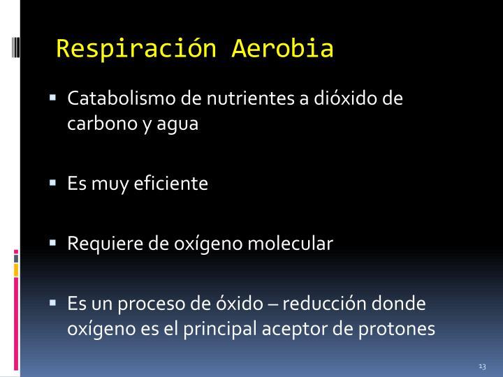 Respiración Aerobia