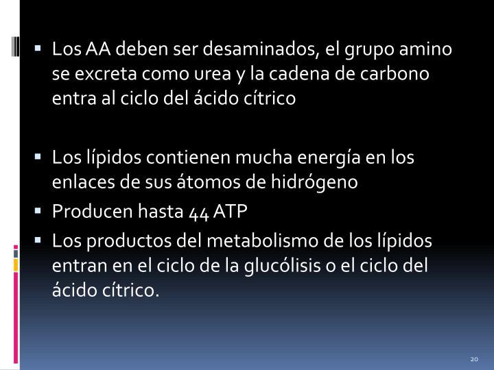 Los AA deben ser desaminados, el grupo amino se excreta como urea y la cadena de carbono entra al ciclo del ácido cítrico