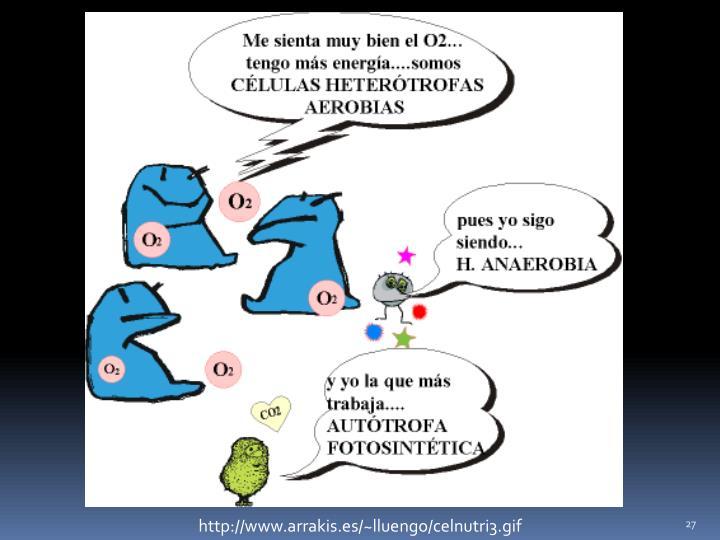 http://www.arrakis.es/~lluengo/celnutri3.gif