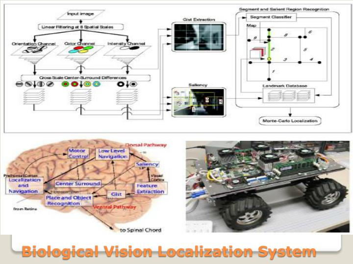 Biological Vision Localization System