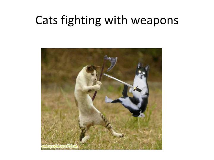 Cats fighting with weapons