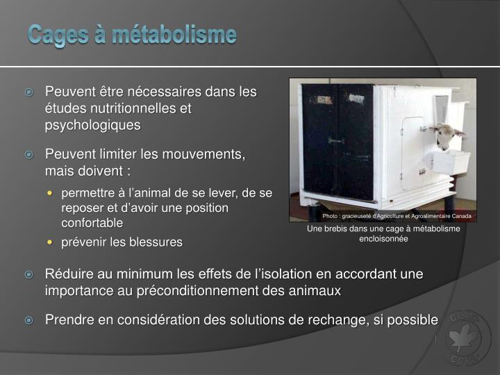 Cages à métabolisme