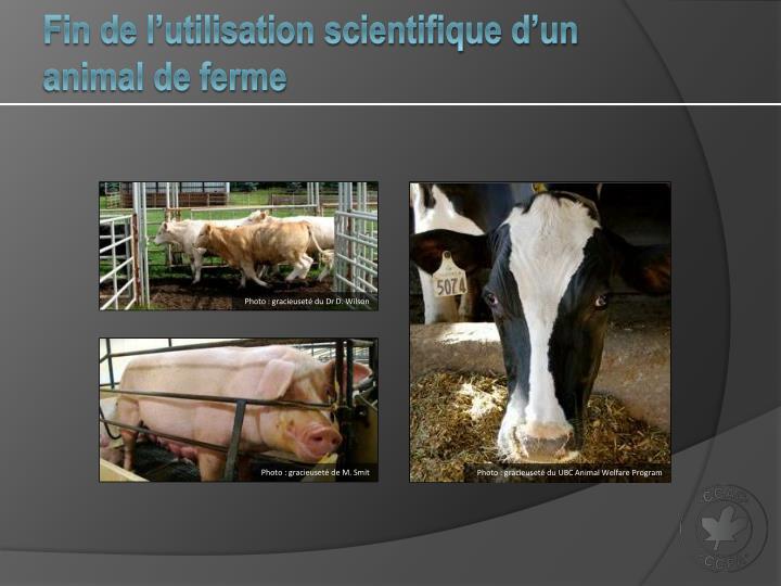 Fin de l'utilisation scientifique d'un animal de ferme
