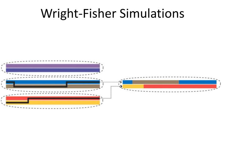 Wright-Fisher Simulations