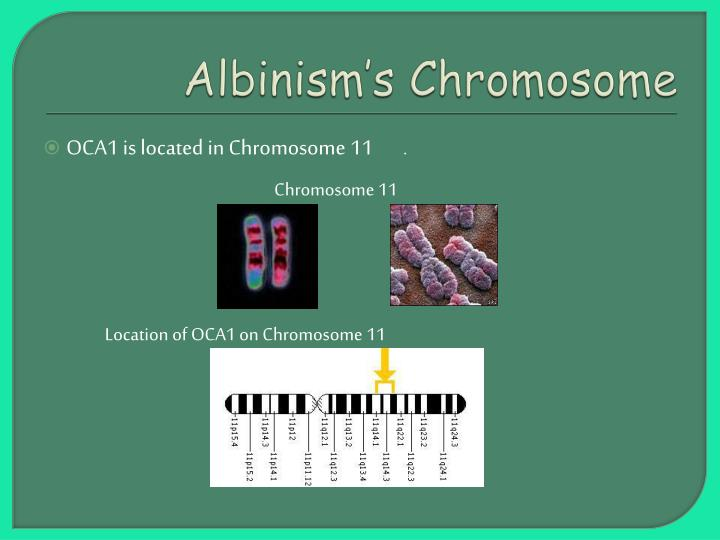 Albinism s chromosome