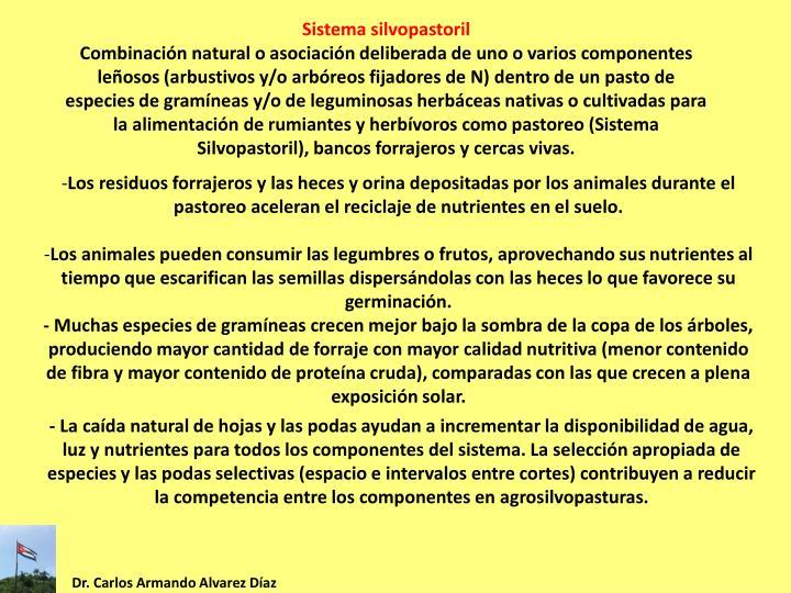 Sistema silvopastoril