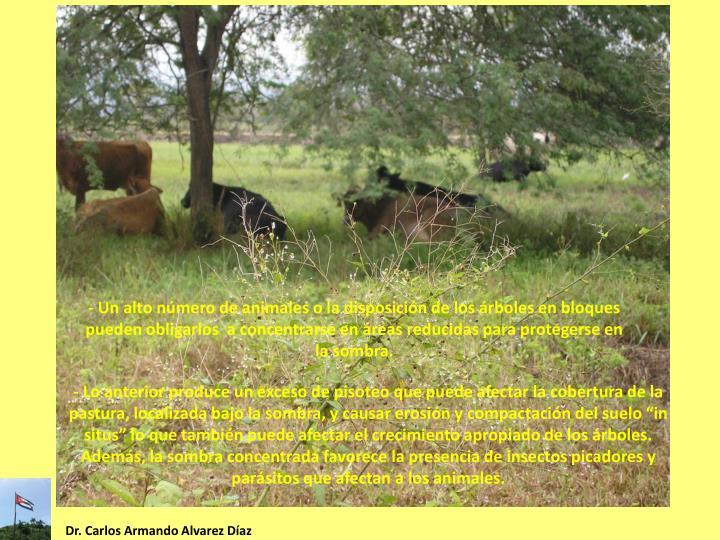 - Un alto número de animales o la disposición de los árboles en bloques pueden
