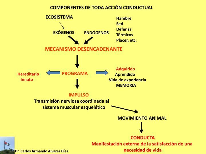 COMPONENTES DE TODA ACCIÓN CONDUCTUAL